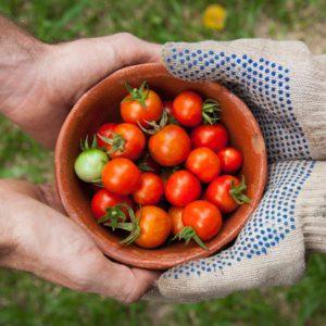 tGroenselof tuinbouwbedrijf Lokeren