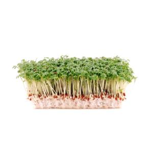 t_Groenselof-Lokeren-groentebox-waterkers